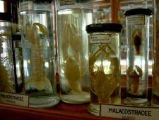 Ce vizitam azi: Muzeul Zoologic in Cluj Napoca