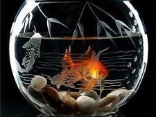 3 locuri ideale pentru a plasa acvariul de pesti