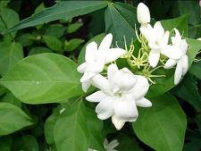 Cele mai parfumate plante de interior