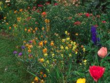 5 idei despre amenajarea gradinilor cu plante perene