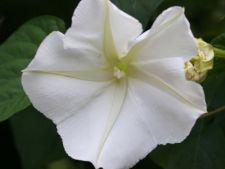 4 plante care infloresc noaptea