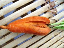Cum poti preveni craparea legumelor radacinoase