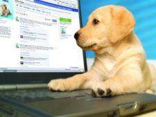 Cainii, mai populari pe Internet decat oamenii