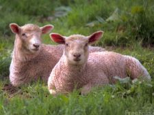 Pot animalele sa prezica dezastrele naturale?