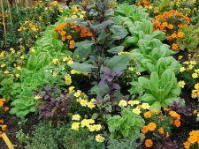 Cum sa alegi plantele de companie in gradina de legume
