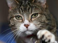 Cum sa tai ghearele unei pisici