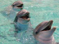 Delfinii pot invata limbi straine