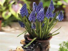 Cum faci plantele cu bulbi sa infloreasca tot anul