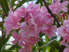 Cei mai spectaculosi arbusti care infloresc vara