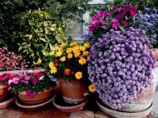 Cum alegi si combini plantele pentru gradina cu ghivece