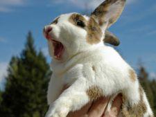 Ce ar trebui sa stii daca vrei sa cresti un iepure