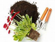 Ce trebuie sa stii despre plantarea florilor in ghiveci