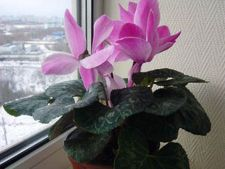 5 pasi pentru ingrijrea plantelor de apartament iarna