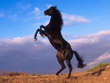Primii cai au fost domesticiti acum 5000 de ani in urma