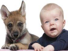 Cum pregatesti cainele pentru sosirea unui copil in casa?