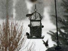 Ingrijeste pasarile din gradina in perioada rece, de iarna