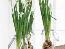 Cum sa grabesti plantele cu bulbi sa infloreasca