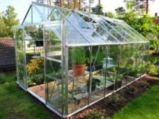 Cum sa previi daunele provocate de anotimpul rece plantelor