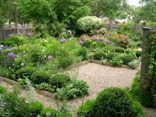 Alege plante de top pentru gradina ta din 2012