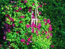 Cum sa construiesti un obelisc pentru plante