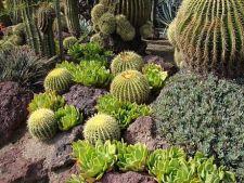 Cum amenajezi o gradina cu plante de desert
