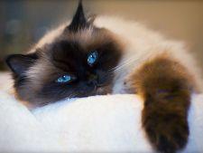 Motive pentru care pisica refuza mancarea