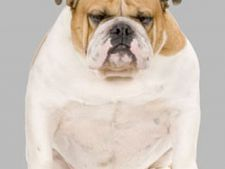 Obezitatea si efectele daunatoare asupra animalului
