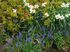 4 idei pentru o gradina plina de culoare in primavara