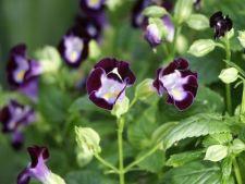 Plante anuale superbe pentru o gradina umbroasa