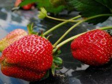 4 plante comestibile care poti fi folosite ca plante ornamentale