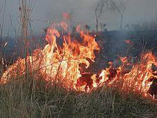 Incendiu in Rezervatia Biosfera Delta Dunarii