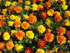 Cumparaturi pentru gradina: cum alegi plantele anuale potrivite