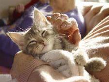 Cafenele cu pisici, locul ideal sa scapi de stres