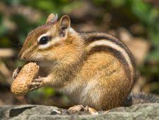 Hranirea si ingrijirea veveritelor
