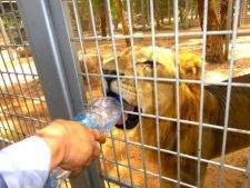 Animale abandonate la gradina zoologica din Tripoli