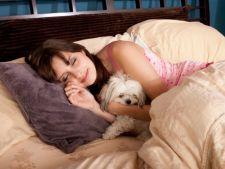 Reguli de igiena pentru animalut atunci cand acesta doarme cu tine