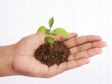 Sfaturi pentru o ingrijire corecta a semintelor si noilor plante