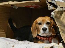 La un an dupa dezastrul de la Fukushima, animalele isi cauta si acum stapanii