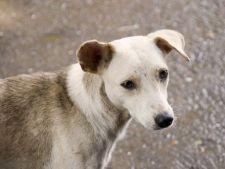 A inceput campania de sterilizare a animalelor comunitare din sectorul 6!