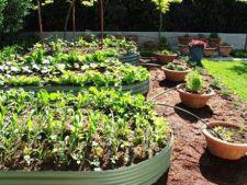 8 pasi in crearea si intretinerea unei gradini organice