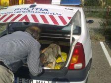 Politia Animalelor, cea mai noua structura a Politiei Locale din Lugoj