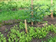 Sfaturi pentru a avea propria gradina de legume