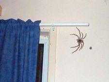 Sfaturi pentru indepartarea insectelor din casa