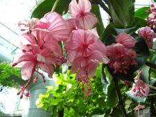 Plante exotice in tendinte in 2012