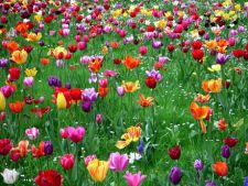 Peste 400.000 de flori vor fi plantate in parcurile din Bucuresti