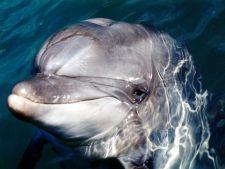 Delfini aflati in pericol de moarte intre gheturile din Crimeea