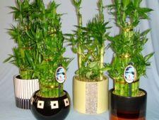 Plante aducatoare de noroc
