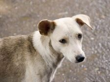 4 aprilie - Ziua Internationala a Animalelor fara Stapan
