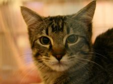 Recomandare de weekend: Sofisticat - expozitia internationala felina de primavara