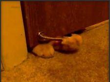 Vezi cum da o pisica desteptarea stapanilor in fiecare dimineata!